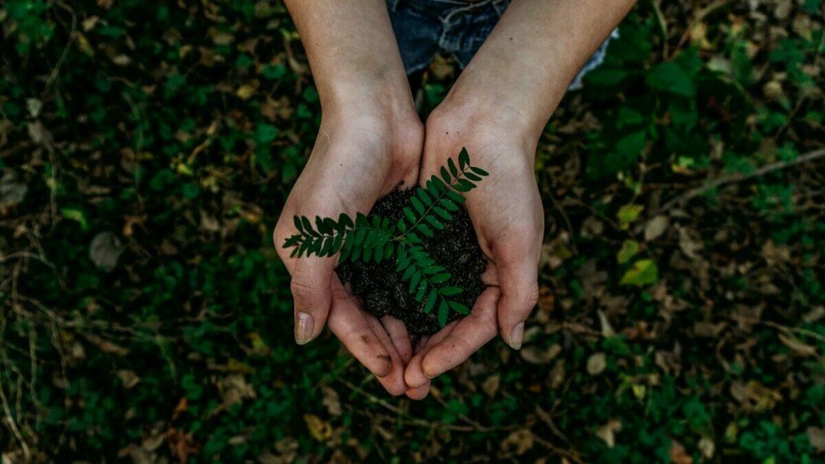 To hender som holder en plante, sett ovenfra.